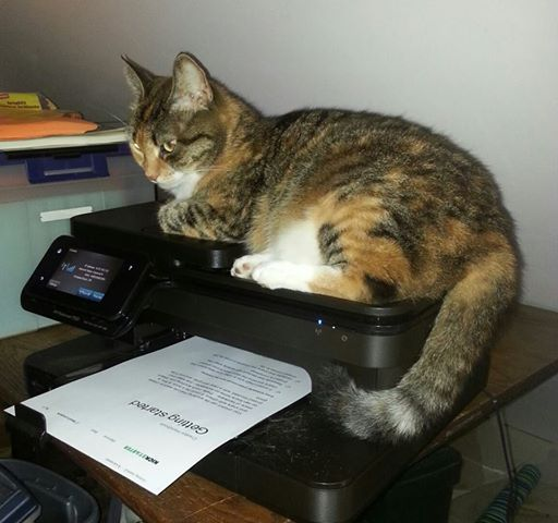 lunesta-on-printer-7-27-14